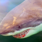 Florida Ranks #1 In U.S. For Shark Attacks