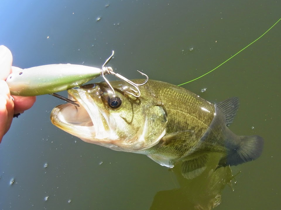 Chug chug rush at ease really messed up for Fishing hook accidents