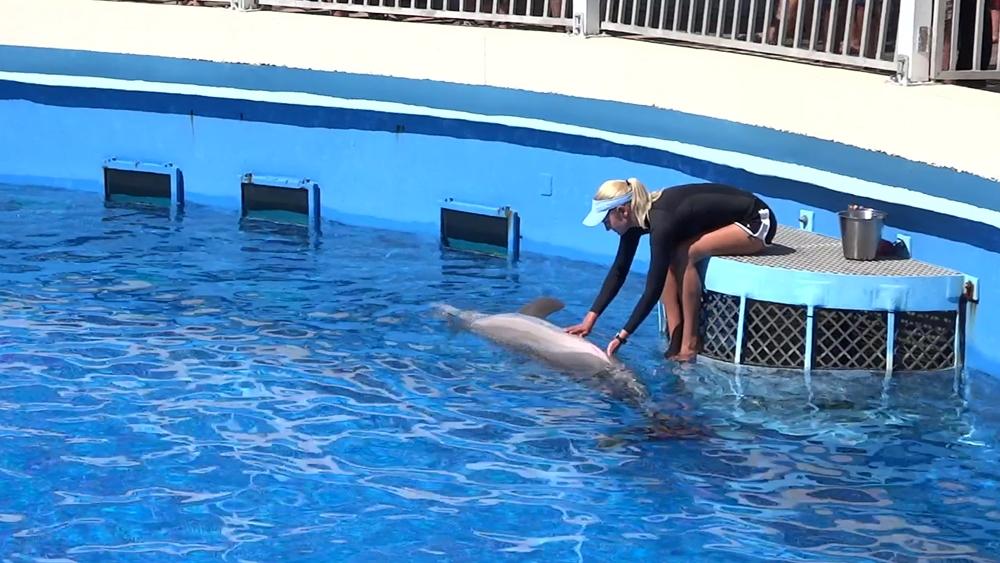 Delfin wird gestreichelt im Gulfarium in Fort Walton Beach