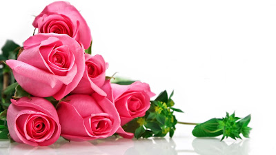 nice-roses-flowers-images-photos