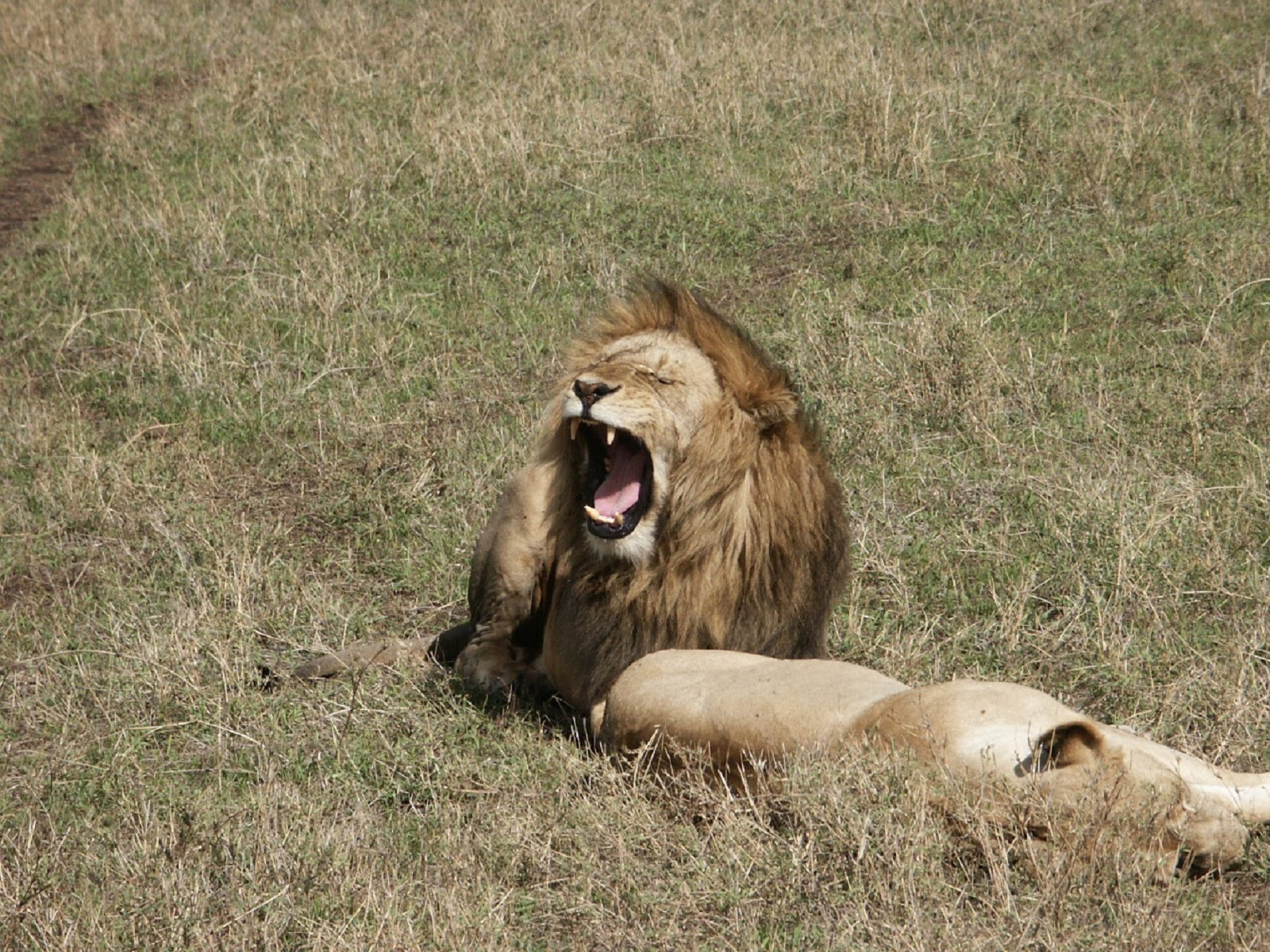 http://2.bp.blogspot.com/-QFEQtTMBffg/Tb1JFTjtcLI/AAAAAAAAIBY/CfbHe4x4nwA/s1600/lion_9.jpg