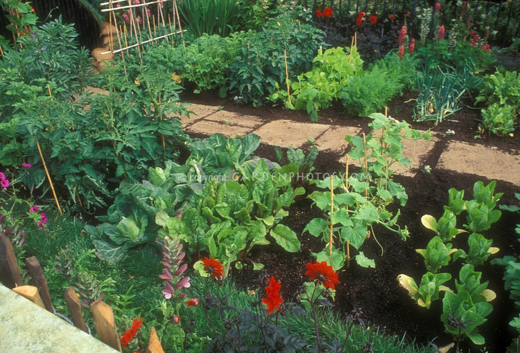 Eat Live Grow Paleo The Perfect First Vegetable Garden