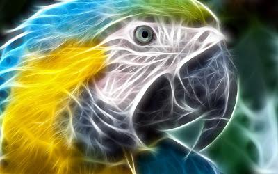 parrot-hd-animal-wallpaper