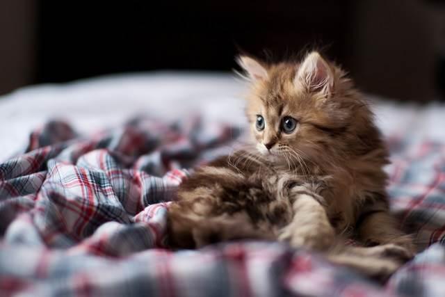 gambar anak kucing atas katil