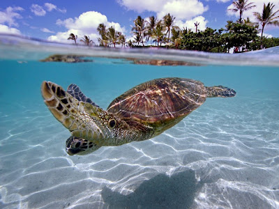 turtle-beach_underwater