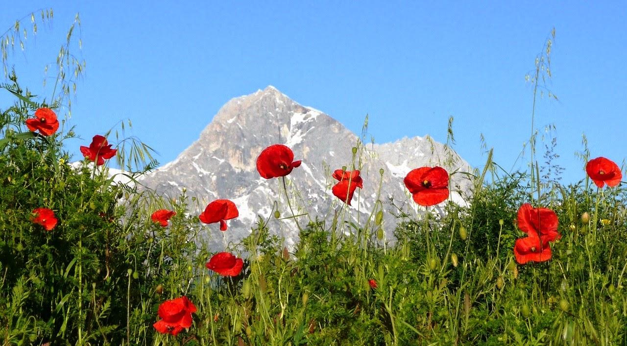 Quaderni di ecologia fiori di primavera il papavero for Fiori di primavera