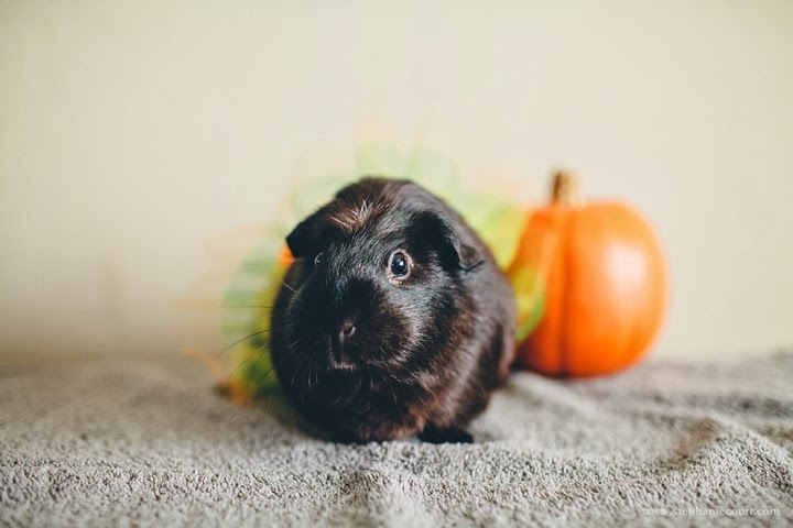 guinea-pig-tutu-ballerina-outfit