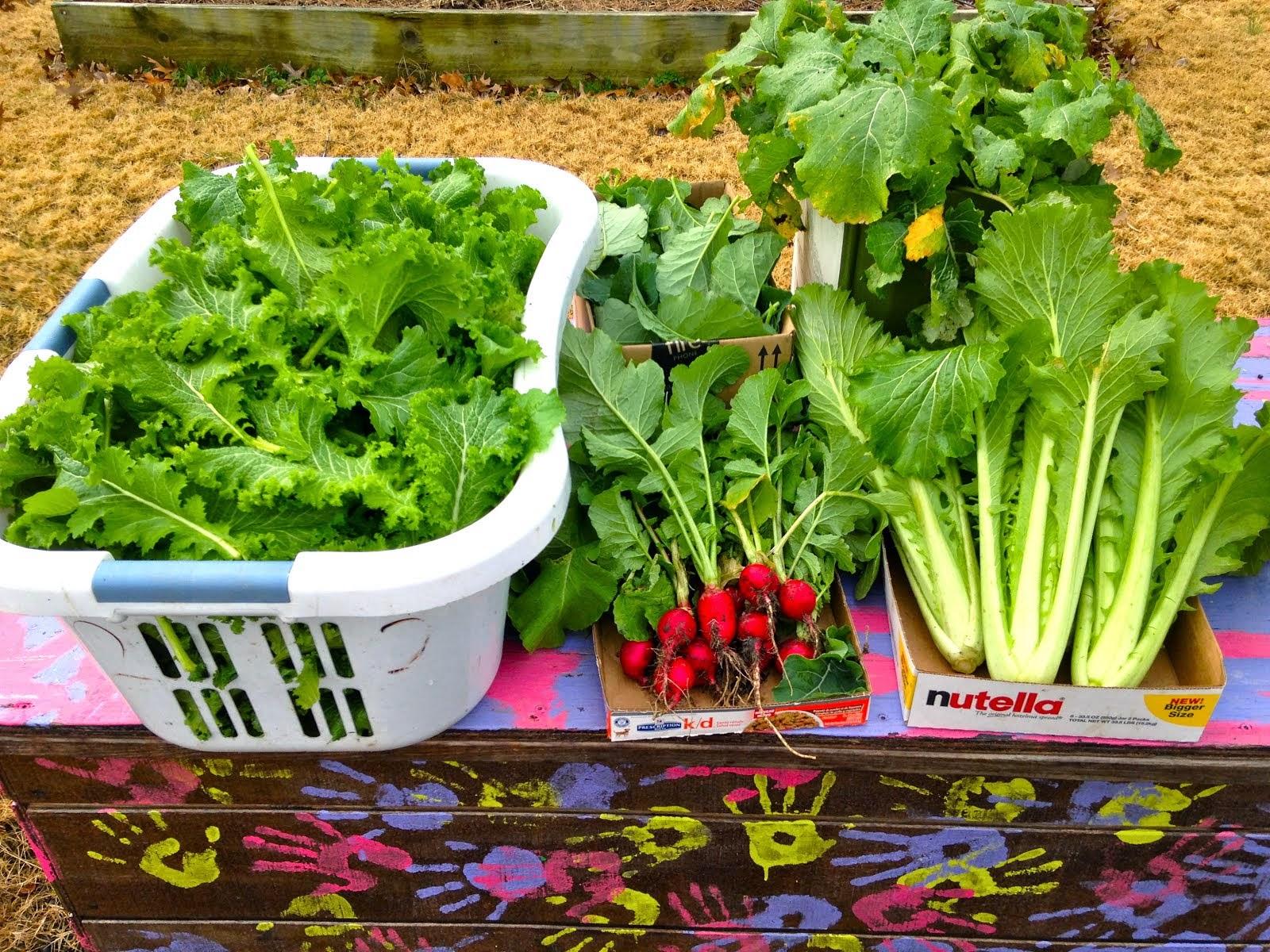 2014 Harvest Donation: 3,286 lb