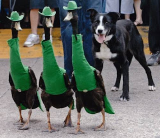 Funny Duck Fashion Show