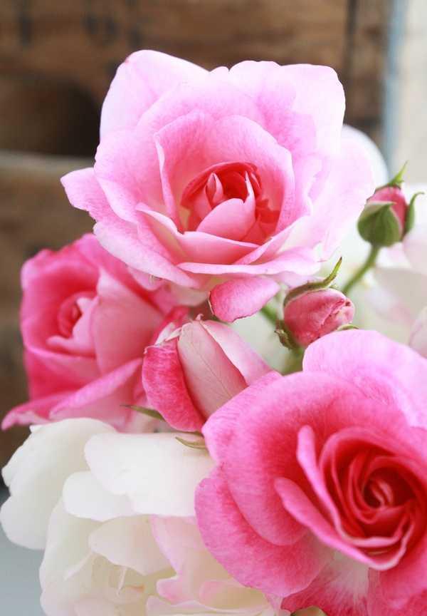 Dolce prugne bellas flores para compartir - Fotos flores bellas ...