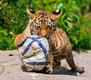 thats my ball