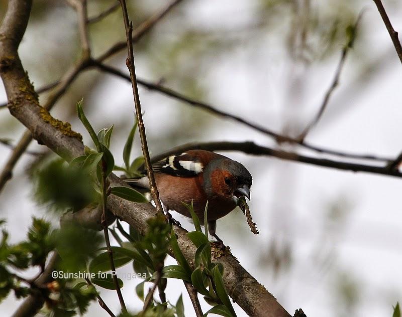 Bird catching a worm