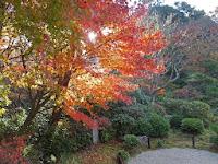 紅葉が朝の光に映て眩しい、持仏堂があり、信仰の篤い傳次郎が座禅を行った。