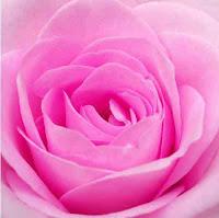 bunga-mawar-pink.jpg (200×199)