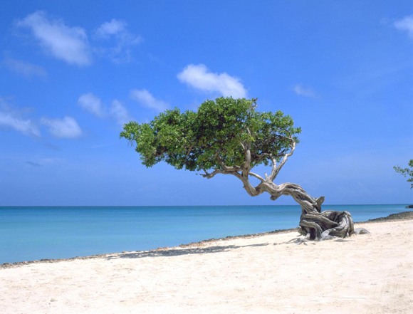 Aruba, Caribbean, best beaches in the world, best resorts, all-inclusive