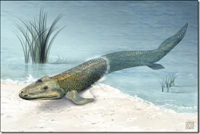 peces del Devonico Tiktaalik