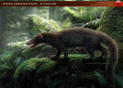 extinct mammals Prolimnocyon