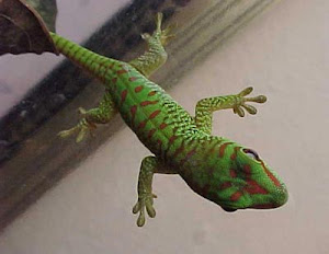 Green Lizard, me
