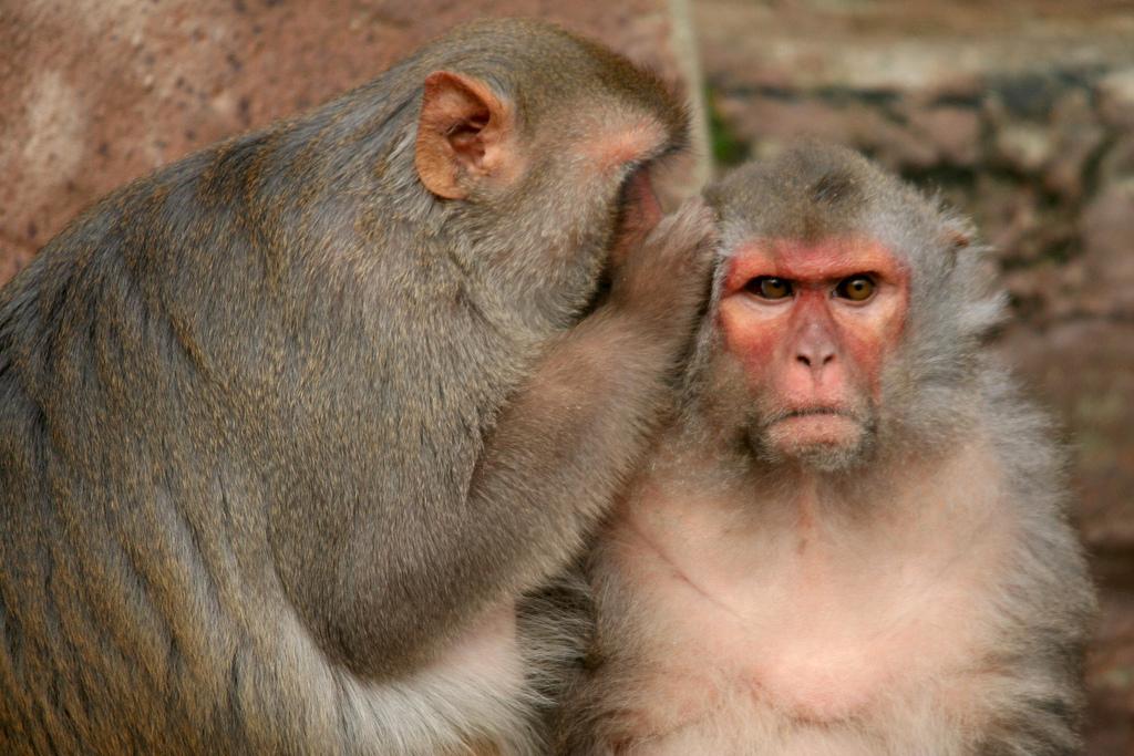 Animal Abuse Monkeys Animal Cruelty Week Kill Those Monkeys