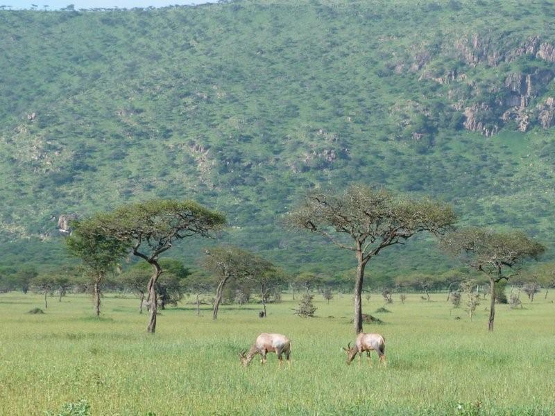Safari Ecology: What is the savanna biome?