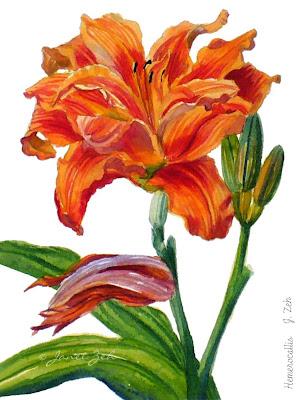Orange Daylily botanical print