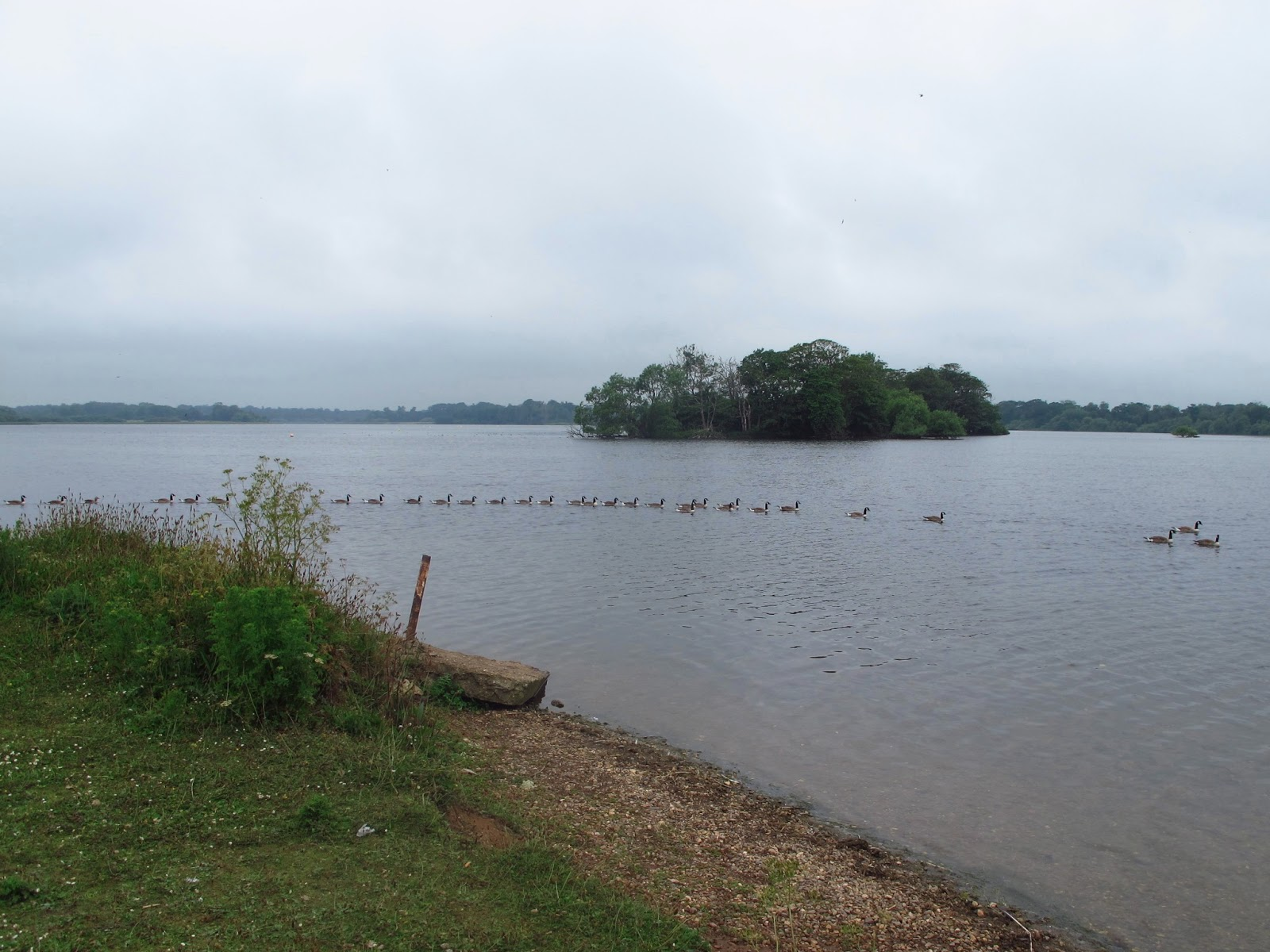 Wild at Hull: Hornsea Mere and Wassand Hornsea
