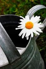 Tankar  från trädgårdsmästaren