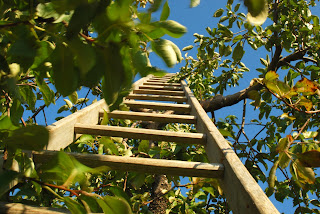 looking up a ladder that is leaning against a tree