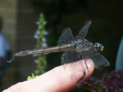 My Dragonfly Friend