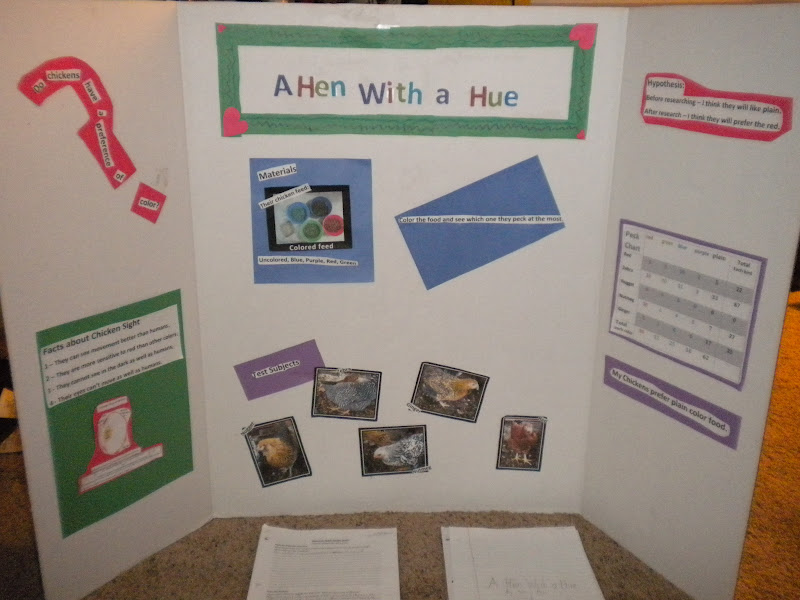 Mossy trees 1st science fair