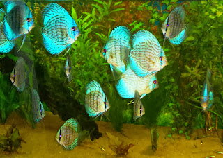 discus fish colors