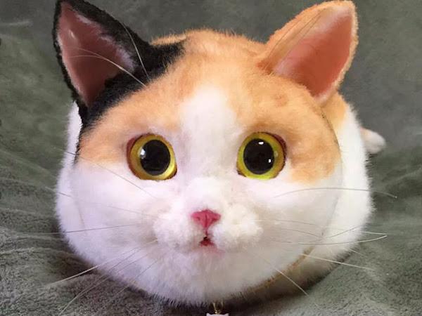Biri Kedili Çanta mı Dedi?