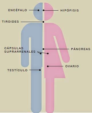 Hormonas Naturales Bioidénticas: Qué es el tratamiento de reemplazo ...