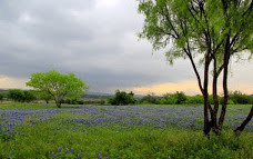 Photographing Bluebonnets in Texas