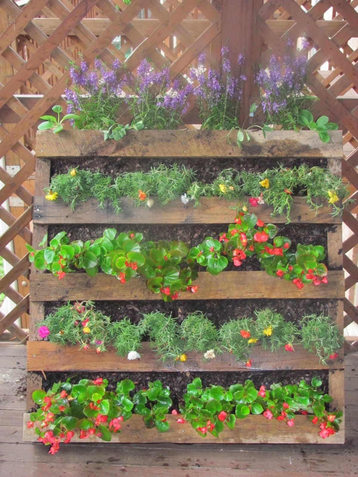the semi urban gardener. Black Bedroom Furniture Sets. Home Design Ideas
