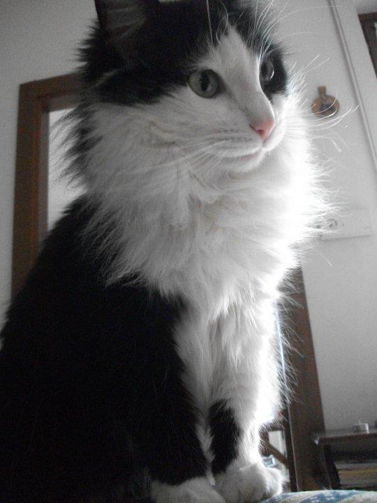 Adotta Un Gatto Anziano 2011
