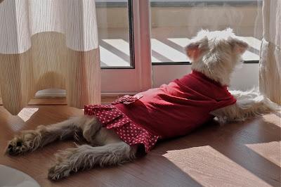foto Leica de vestido vermelho no sol