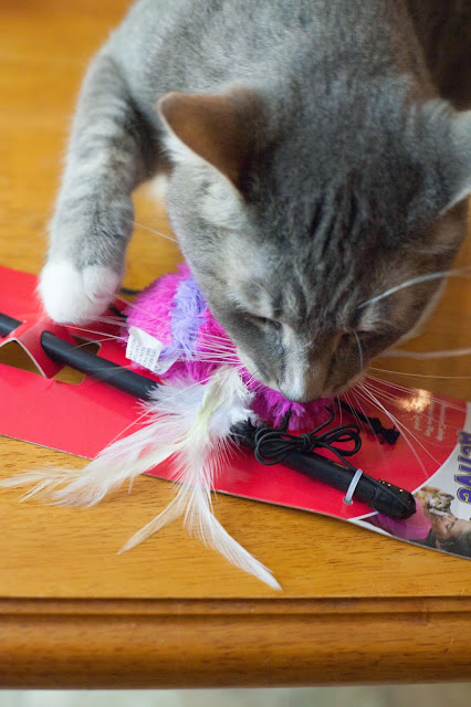 Chewy.com cat toy
