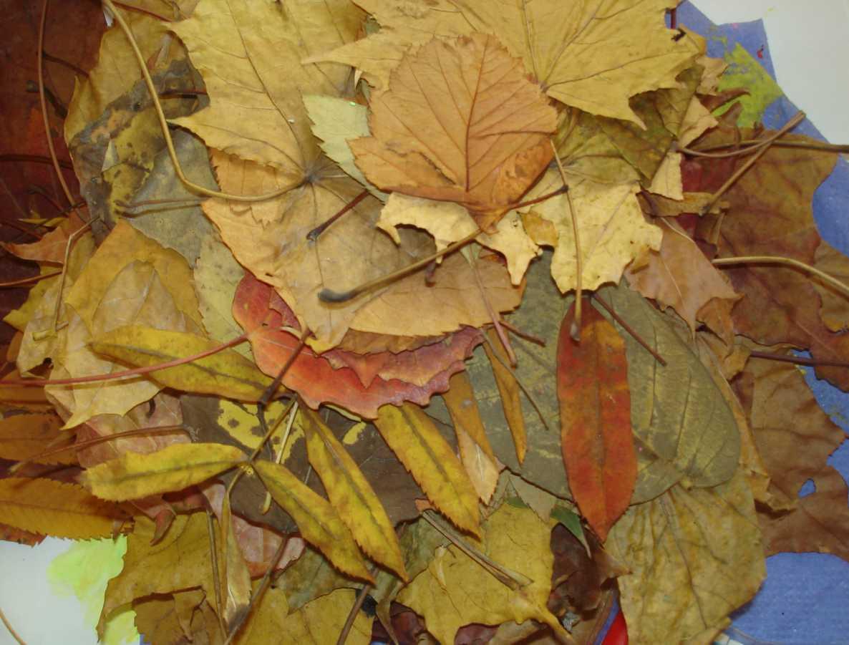 Как сушить листья для поделок 985