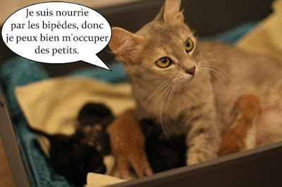Une maman chatte et ses 7 chatons.