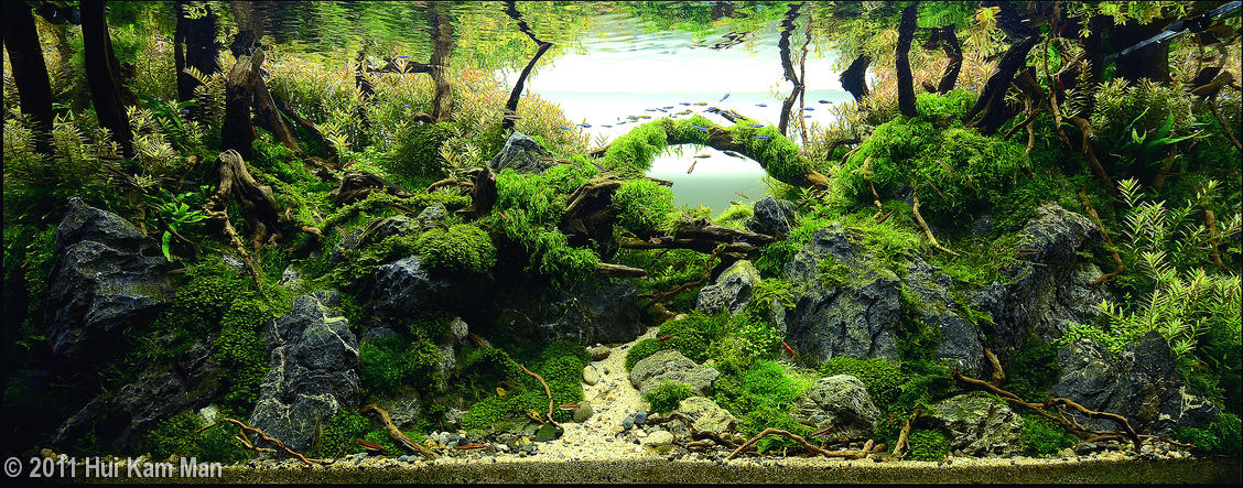 Typically, An Aquascape Houses Fish As Well As Plants, Although It Is  Possible To Create An Aquascape With Plants Only, Or With Rockwork Or Other  Hardscape ...