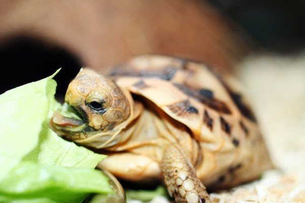Rules of the Jungle: Taking Care of a Baby Tortoise