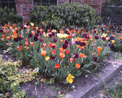 School Fundraising Flower Bulb Photo - flower bed
