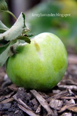 august-in-the-garden-apple