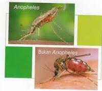 askep malaria, Blog Keperawatan