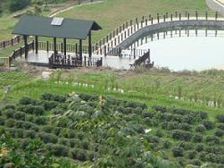 modern organic farm