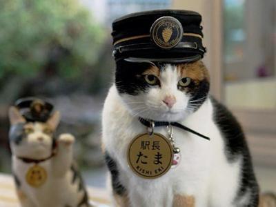Foto Kucing Lucu Imut dan Menggemaskan 09