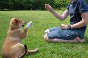 Domando a un cachorro