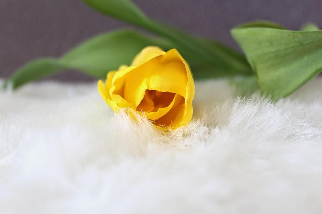 жёлтый тюльпан на меховом покрывале