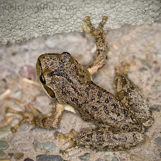 Peace Frog (c) John Ashley